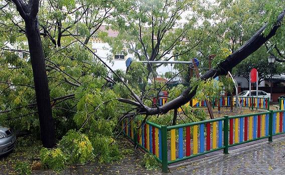 La falta de control a las contratas de Parques y Jardines siembra Sevilla de árboles caídos